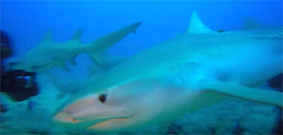 A Shark Got Ahold Of A Diver's Camera In Jupiter And Showed Us The Inside Of Its Mouth