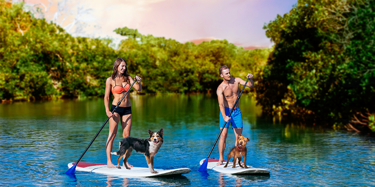 Harbourside Place's August Calendar Features Puppy Paddleboarding, Movies, Live Music And More