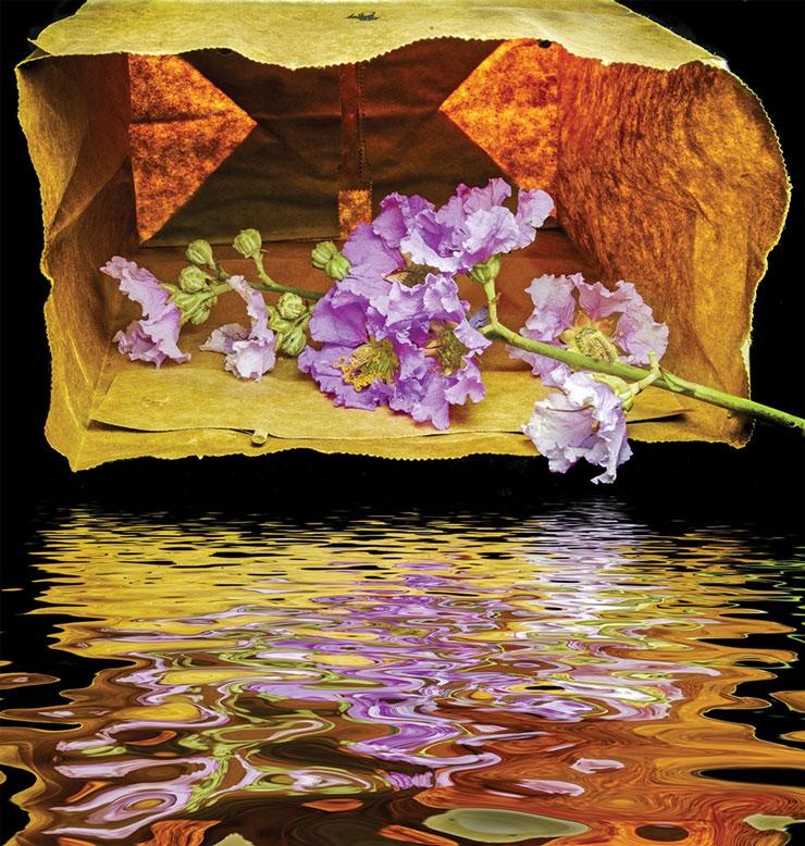 A Floral Exhibit