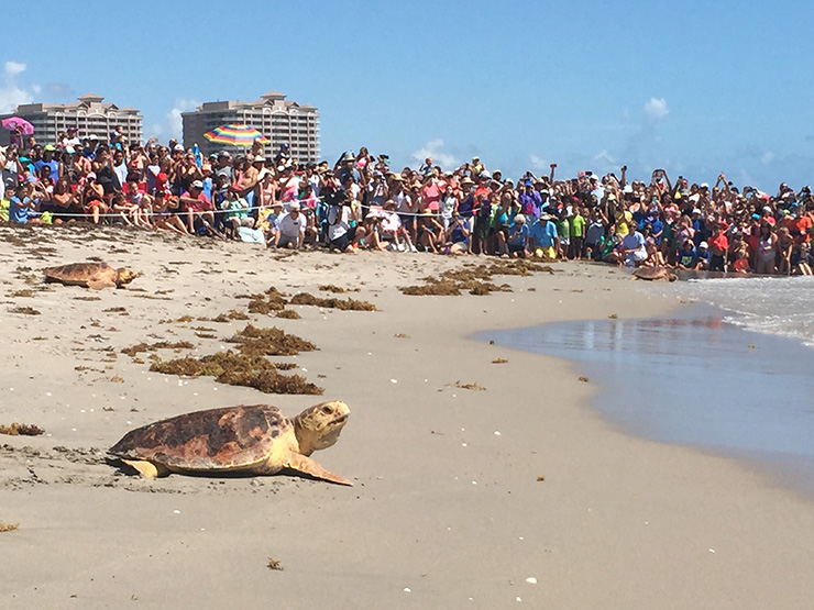 Loggerhead Marinelife Center Receives Charity Navigator's Top Ranking for Third Year In A Row