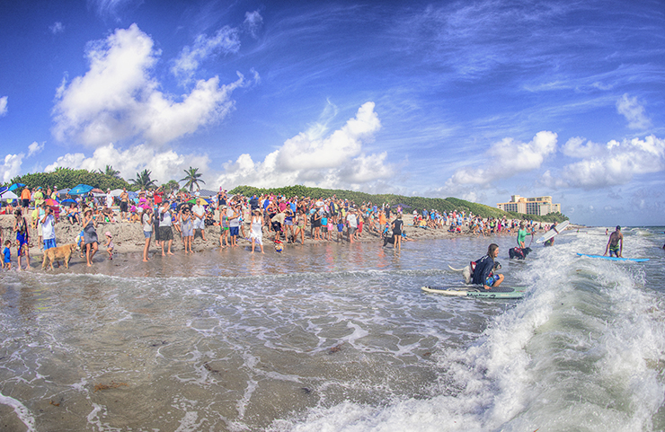 2nd Annual Hang 20 Surf Dog Classic Will Bring Talented Pups To Jupiter's Carlin Park For A Day Of Catching Waves