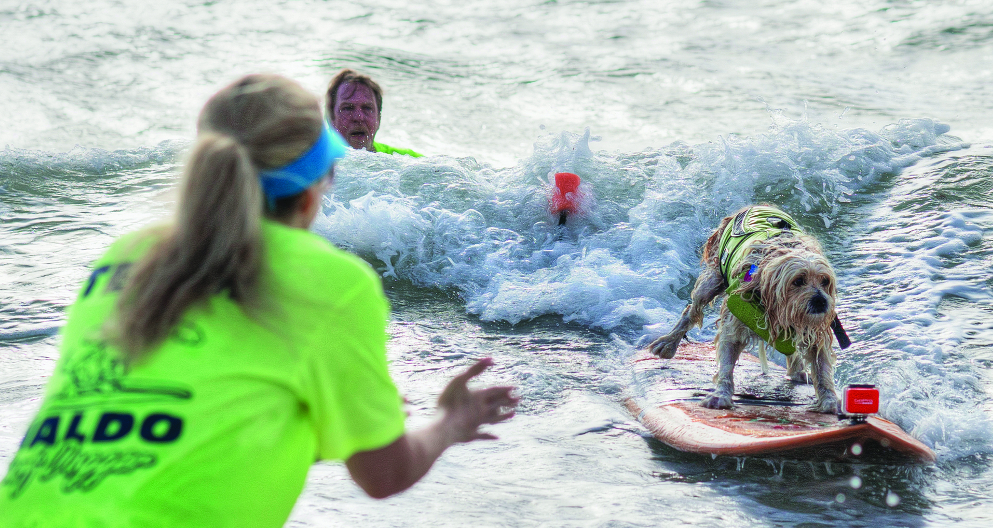 Watch Dogs Catch Waves at 3rd Annual Hang 20 Surf Dog Classic at Jupiter's Carlin Park