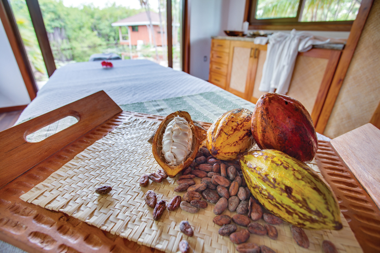 Learn About Chocolate In The Jungles Of Belize