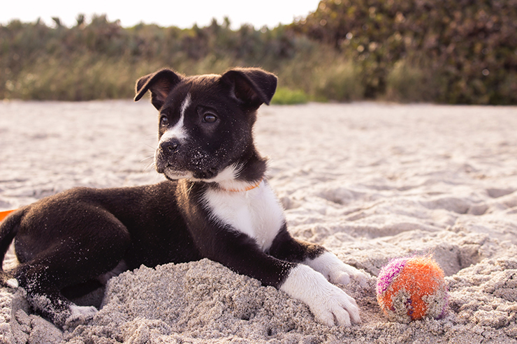 Donate To These 4 Palm Beach County Animal Shelters On National Dog Day